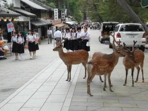 Japonya'nın ilk başkenti olan Nara, tarihi güzelliklerinin yanı sıra insanlarla içiçe yaşayan yaban geyikleriyle de ünlü.