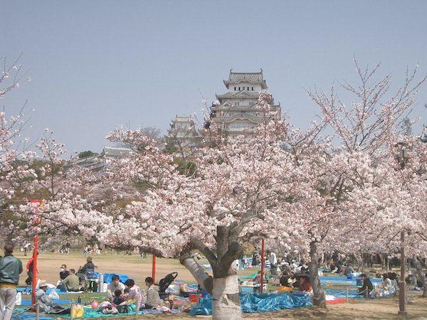 Himeji Sarayı etrafındaki sakura ağaçlarının altında hanami yapan Japonlar.